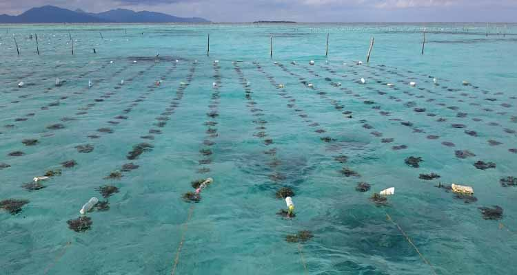 Mayor Ahong eyes 240-hectare seaweed farm to alleviate fishermen from poverty
