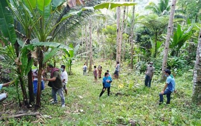 Abaca can be ally vs. plastics pollution, deforestation