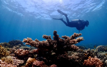 Resort owners, divers fear effects of reclamation project