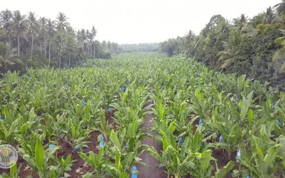 Agrarian reform recipients to benefit from PARC's ruling