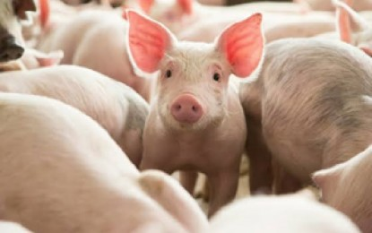 W. Visayas to get P300-M loan facility for hog growers