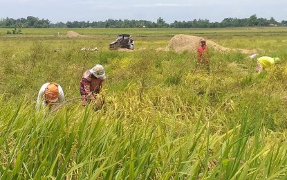 Buy directly from rice farmers, LGUs told