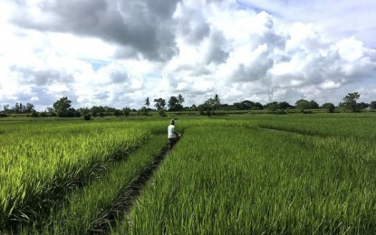 Solon wants to expedite release of rice funds to boost production